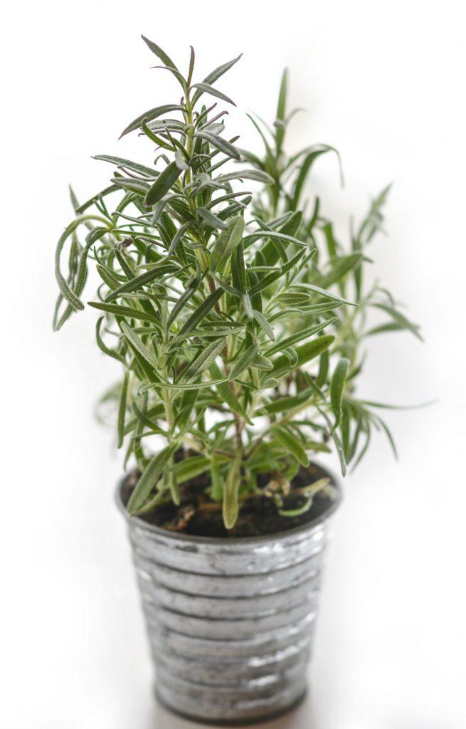 Etykiety do roślin na tymianek.