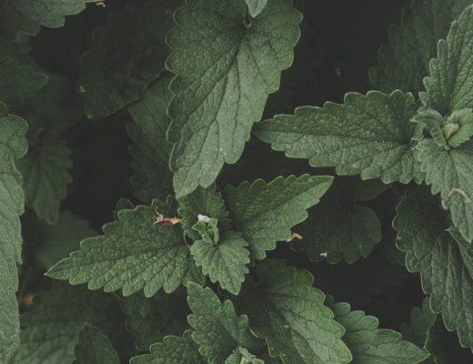 Sięgnij po etykiety do roślin.